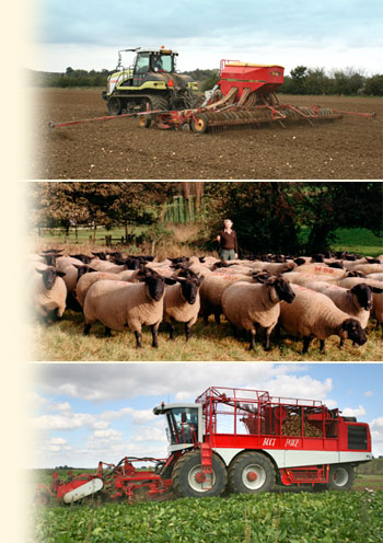 Seed drilling, sheep herding and potato harvesting